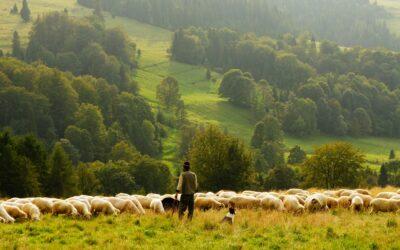 De Here is mijn Herder Psalm 23