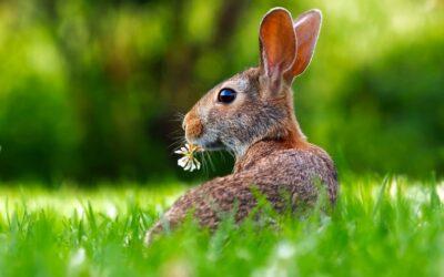 Plantaardig eten: meer dan alleen 'konijnenvoer'